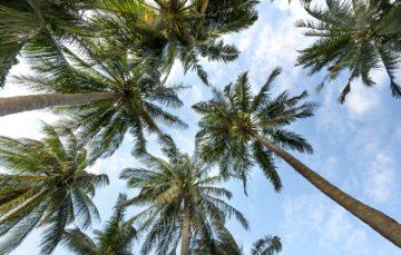 Quelques inconvénients de la vie sous les tropiques